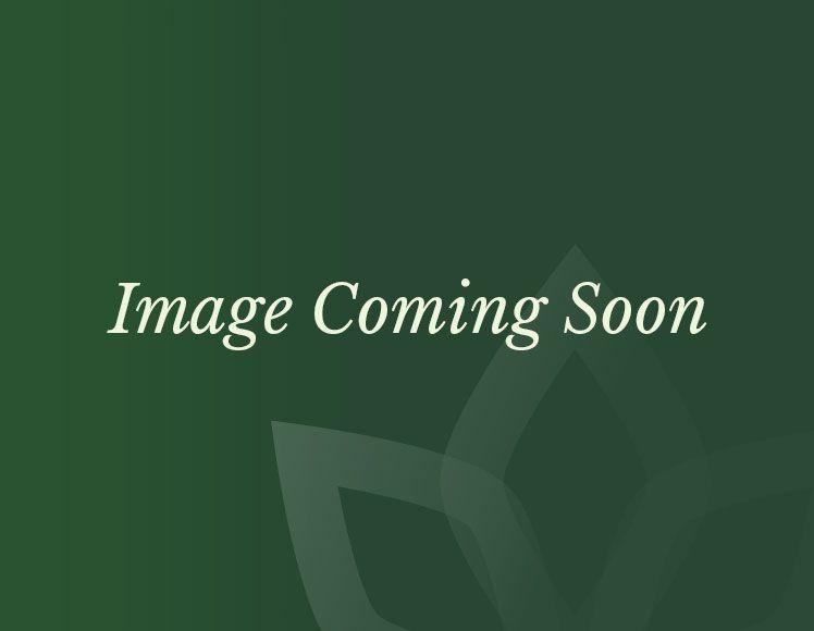 6ft Gold Poinsettia Garland